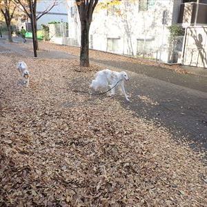 天高く犬肥ゆる秋本番です