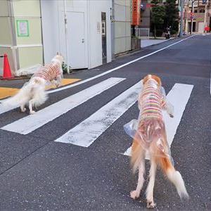 マスクをしていざ!犬との散歩
