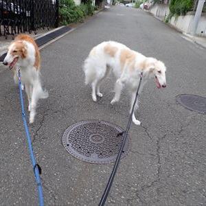 新吉田東一丁目の丘を徘徊する