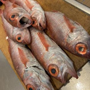 最近の我が家におけるお魚事情