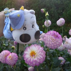 お花がだいすきなぼく