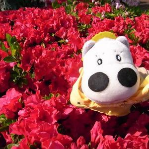 満開のお花とぼくたち