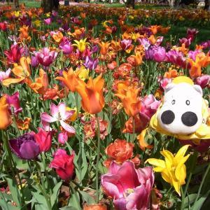 いっぱいのお花とぼくたち