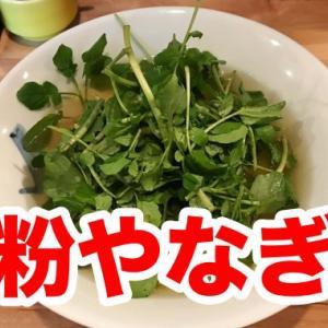 【粉やなぎ】名物「クレソンうどん」を食す。半透明の平麺うどんはツルツル美味や!