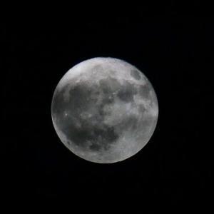 今日は、満月