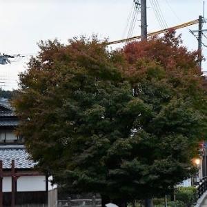 姫路 ハート の モミジ