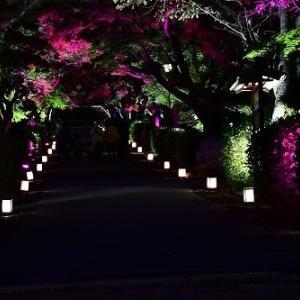 西教寺 ライトアップ