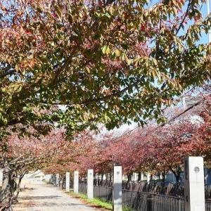 手柄山中央公園 紅葉 '19