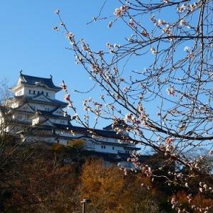 今日の姫路城 (2019.12.3)