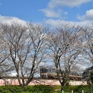 桜 と 電車 '20 ③