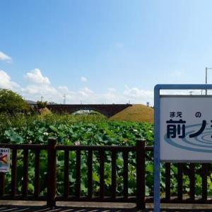 前ノ池 蓮・平木橋