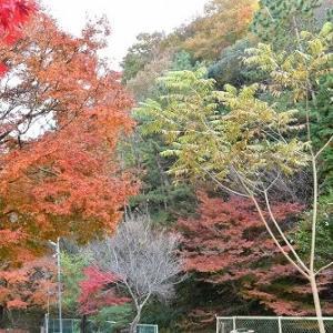 たつの市 東山公園 紅葉 '20