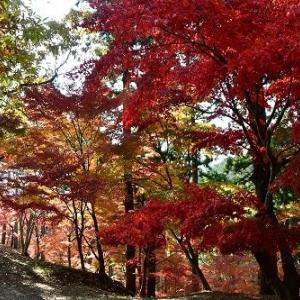 最上山公園 紅葉 '20