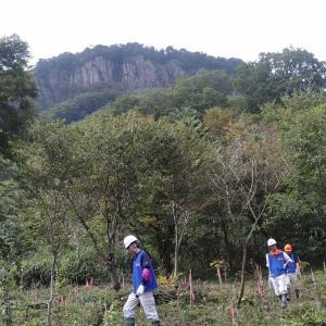 日本水産グループの森林整備活動