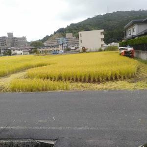 稲刈りが始まった