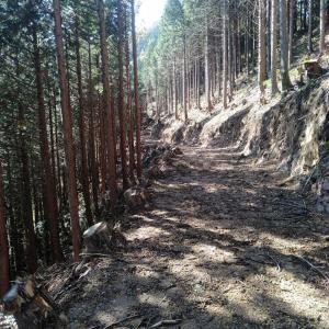 こんなに急な斜面に木を植えている