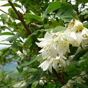蒜山で見た花