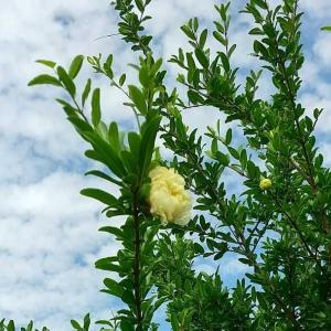 本日は沖縄慰霊の日です