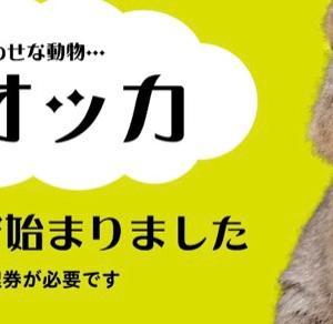 """3年ぶりにリベンジだ!!""""世界一幸せな動物?クオッカワラビーとの残念な出会い"""""""
