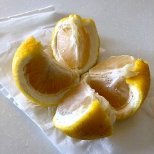 河津桜の原木とやたら目につくニューサマーオレンジって!