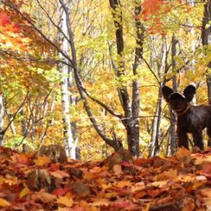 キトウシ山の紅葉