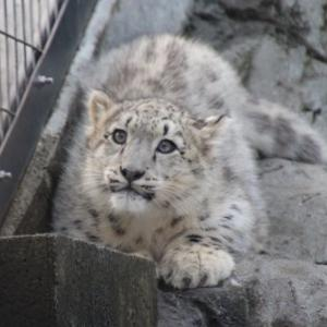 久しぶりに旭山動物園