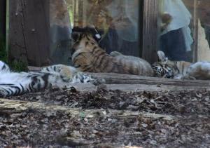 旭山動物園が開園しました