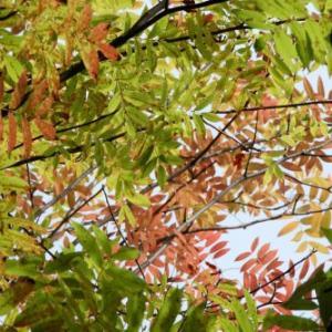 秋が近いね
