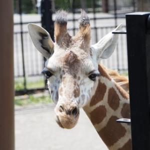 旭山動物園へ♪