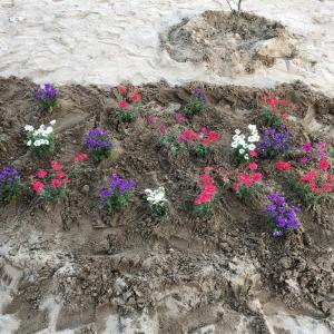 ガーデニング始めました日記⑵〜ポツポツとお花を植えてみた〜