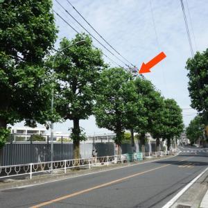また、通学路の電柱にカラスが巣作りを始めましたので東電さんに2回目の除去の依頼をしました。