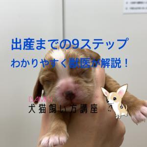 犬の出産までの心構えと流れをどこよりも詳しく9ステップで解説!