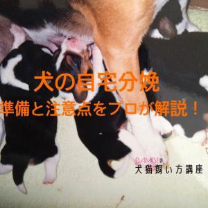 犬の自宅出産 分娩の流れにそって準備と注意点を獣医が解説!