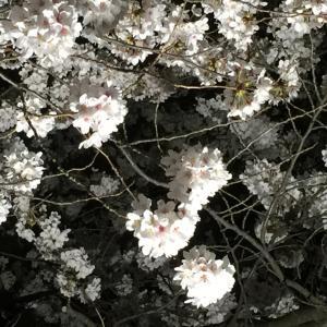 春季例大祭の ご案内