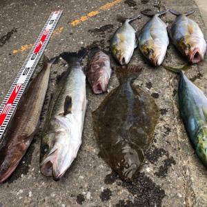 釣りも結局は確率!!初ショゴ釣りあげました!!