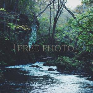 森の中を流れる川の画像