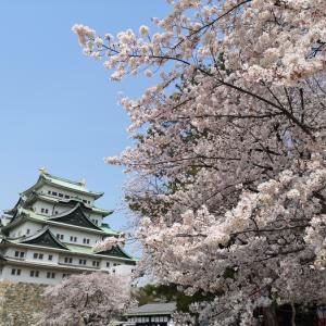 桜の名古屋城を見に行きました