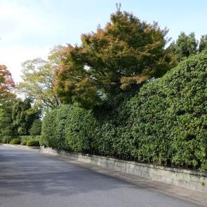 城南宮の楓はまだ色づき始め…でした。