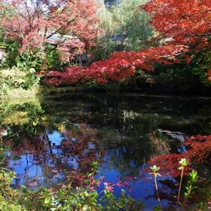 次回は京都市左京区の紅葉を…