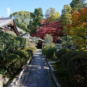 栄摂院の庭園:2019年11月