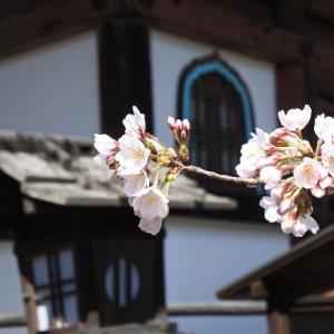 京の桜2020(8)