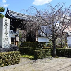 京の桜2020(9)