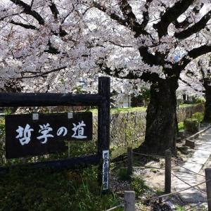 京の桜2020(18)