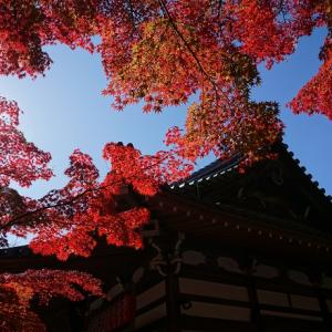 赤山禅院(2):2020年11月中旬