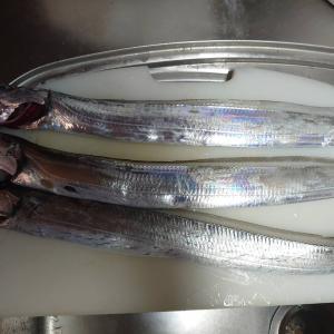 """""""婿殿""""が釣った太刀魚が美味しかった!"""