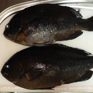 婿殿の釣った魚とお夕飯 今日は一粒万倍日、満月、おとめ座!