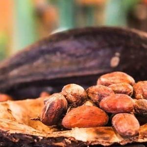 「チョコレートの歴史」について調べてみた