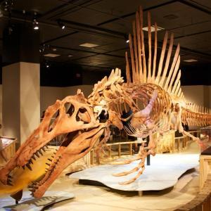 スピノサウルスの発見から現在に至るまでの研究の歴史