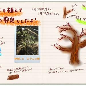 2月は果樹のお整えの時期!みかんを植えてキウイを剪定した記録