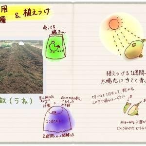 春ジャガを植える前に準備と下調べ(2)